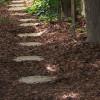 Mulch Benefits Trees