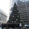 Northlake Spruce chosen To be Chicago's Christmas Tree