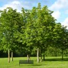 Benefits of Trees in Urban Areas